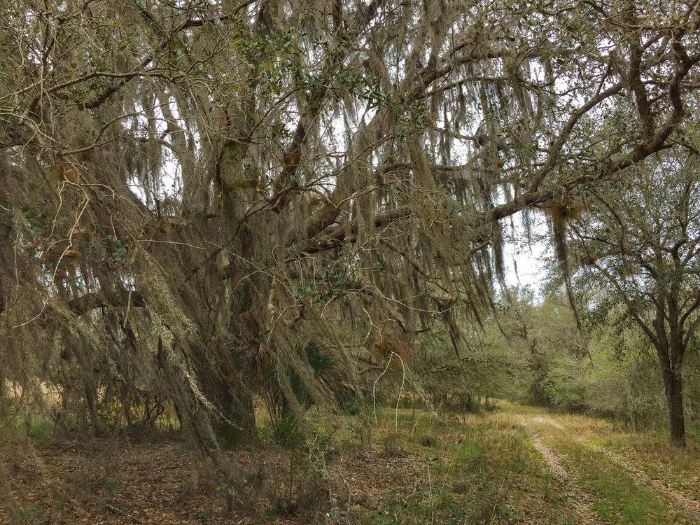 Old homestead road Florida Florida Nature Florida Trail Three Lakes WMA