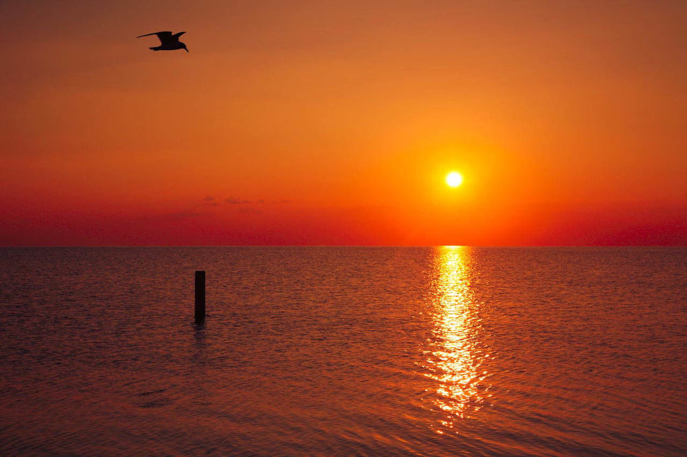 Sunset Flight! Sunset Sillouette Birds Red Ocean Coastline Flight Sailorsdelight People Of The Oceans