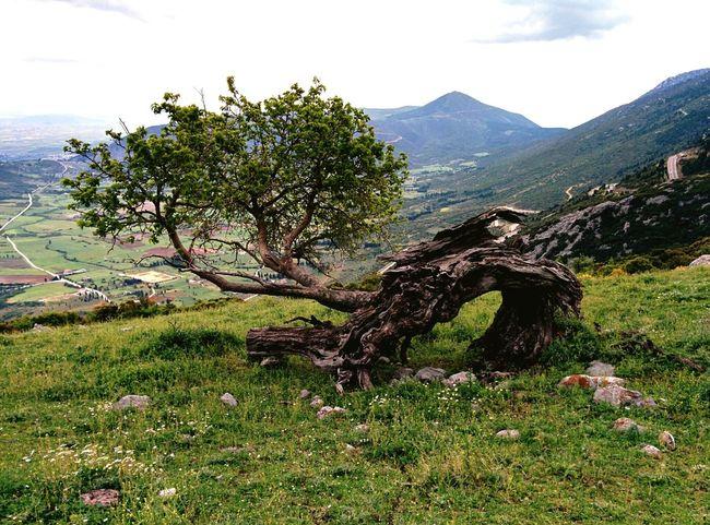 Nature Broken Lonely Reborn