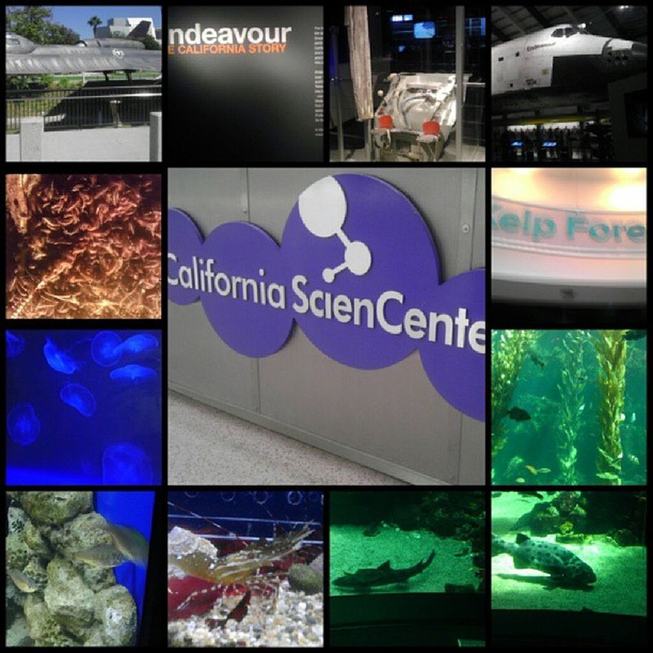 Our trip to the CaliforniaScienCenter and it was amazing we are definitely coming back to see more cuz we didn't finish it lol Airforceonejet Endeavour Spaceshuttle spacetoilet kelpforest jellyfish shrimps leopardsharks maggots