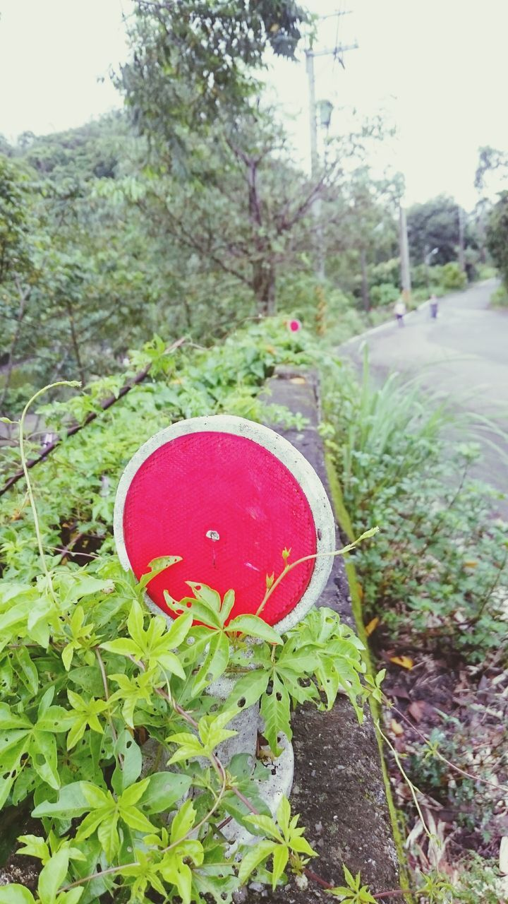 growth, red, tree, plant, green color, nature, no people, day, leaf, grass, outdoors, the way forward, beauty in nature, close-up