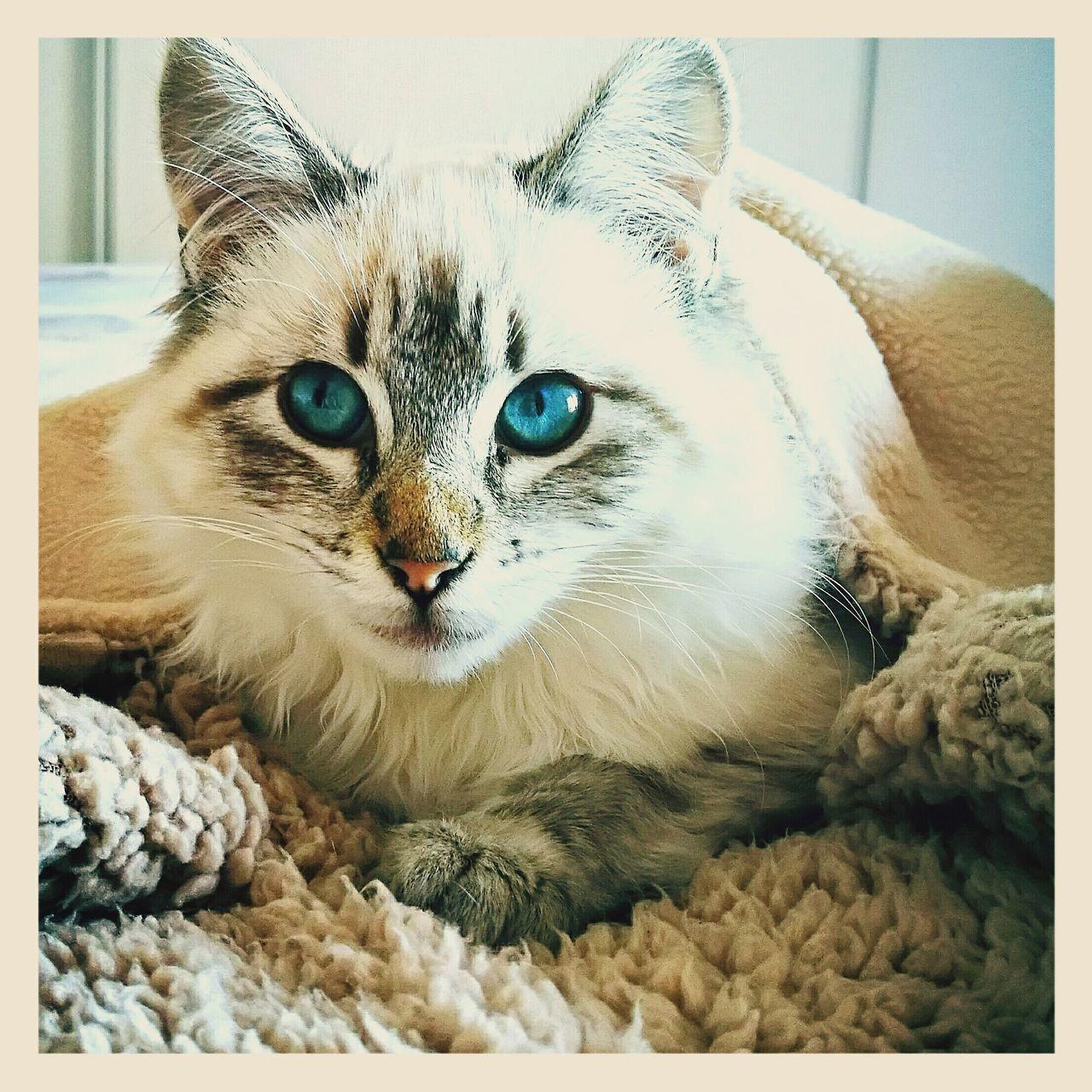 Doris Babycat Mylove Domestic Animals Feline Pets Catwoman Catlovers