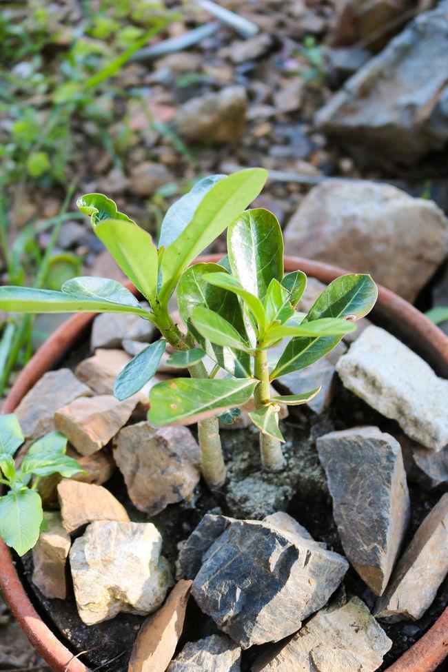 Growth Plant Small Tree