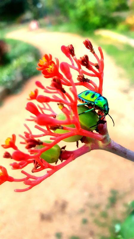 Green Bug Eyeeem Gallery EyeEm Nature Lover Fluroscent Fluro Green Flower Collection Flowers,Plants & Garden Red RedFlower Plants And Flowers Samsungphotography S6 Edge Photography S6 Edge Photo Fun