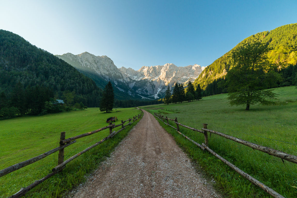 Pasture in the morning in Zgornje Jezersko Beauty In Nature Country Road Countryside Diminishing Perspective Grass Grassy Gravel Green Landscape Morning Mountain Mountain Range Nature Non-urban Scene Pasture Photography Remote Road Rural Scene Scenic Slovenia Summer Tranquility Tree The 00 Mission