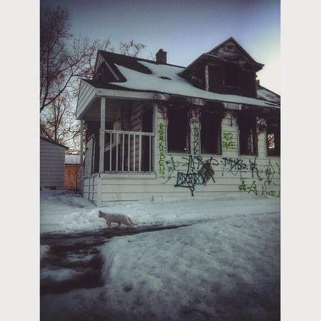 Flint 810 Abandoned