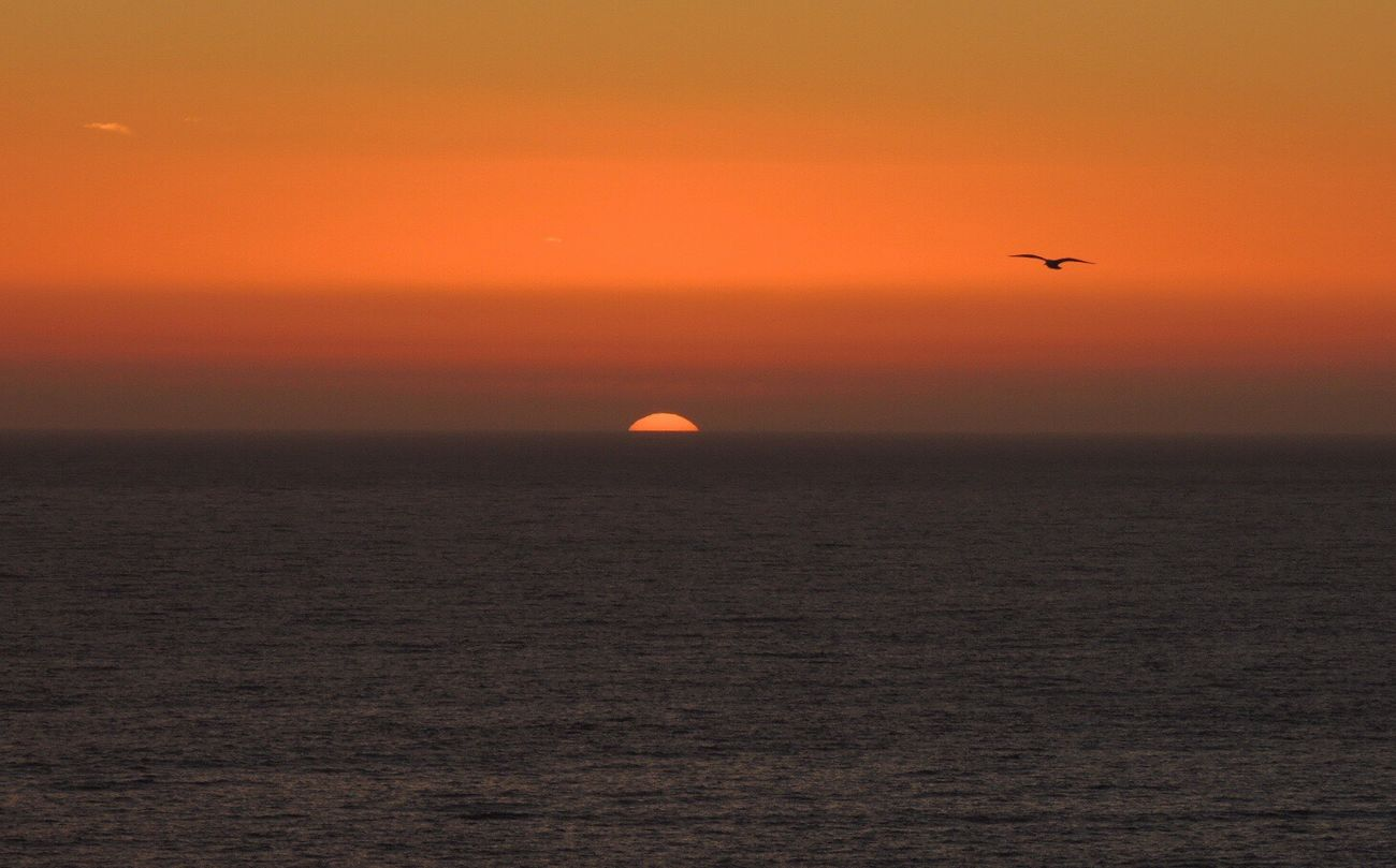 Sunset Is The Perfect Timing To... Sundown...♥ I Love Sunset Sundownlovers Beautiful Sunset Peaceful Enjoying Life The Best Moment Of The Day Enjoying The Sunset Sunset And Sea Bird In Flight Orange Sky Sunset Relaxing Reñaca Beach , Chile