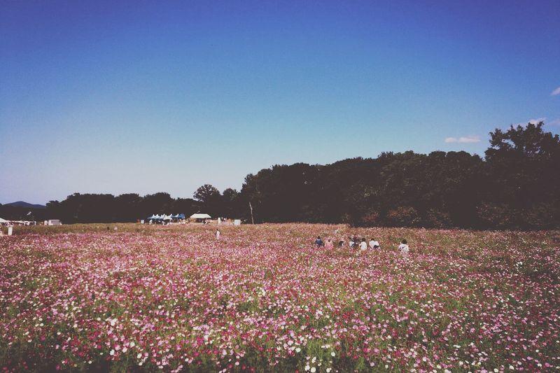 enjoy autumn Flowers Keicomoment Landscape Colors Of Autumn