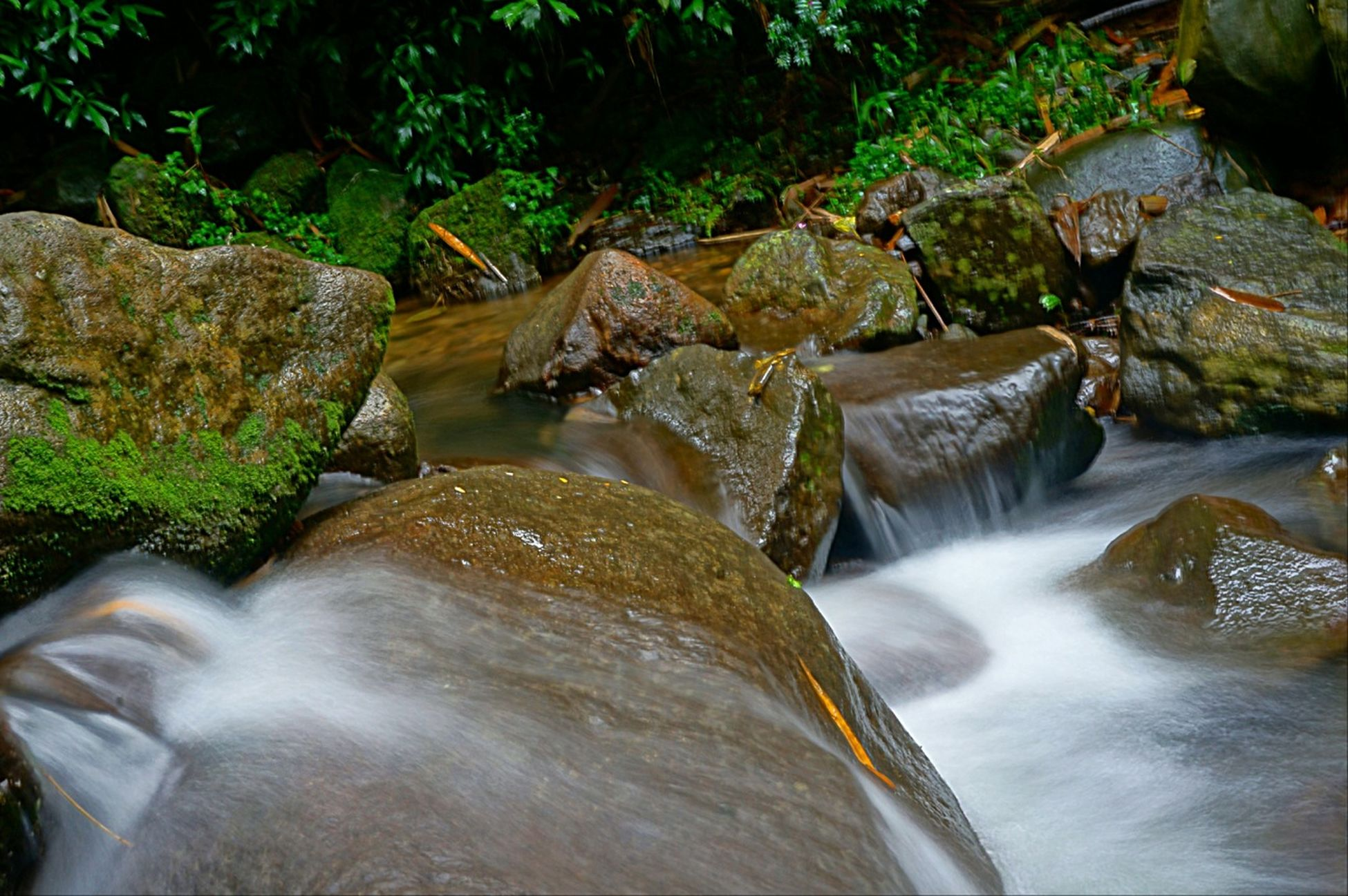 water, flowing water, waterfall, flowing, motion, rock - object, nature, stream, beauty in nature, forest, tree, long exposure, river, waterfront, day, outdoors, rock, no people, scenics, tranquility