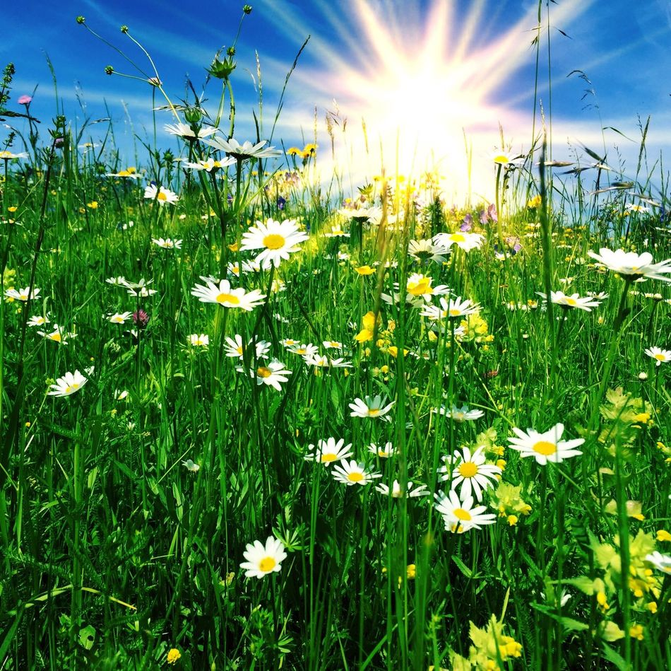 Sunny flower meadow Spring Nature Flowers Marguerite Green Sun Alps Bavaria Austria Colorful Colors Sunny Vacation Mountains Allgäu Grass Ecology Environment Hike Beauty Beauty In Nature Summer Weather Health Recovery