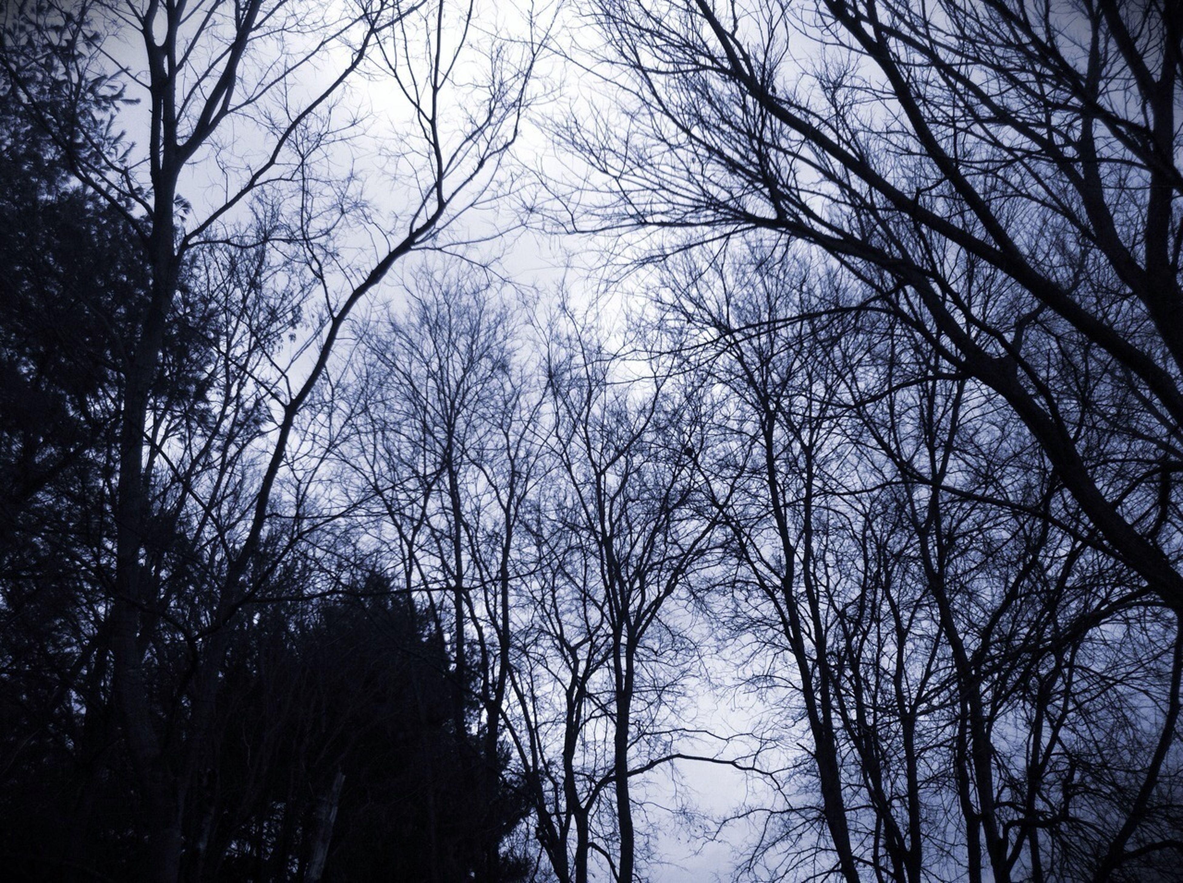 bare tree, tree, branch, silhouette, tranquility, low angle view, nature, sky, tranquil scene, beauty in nature, scenics, tree trunk, outdoors, growth, clear sky, no people, forest, dusk, day, idyllic