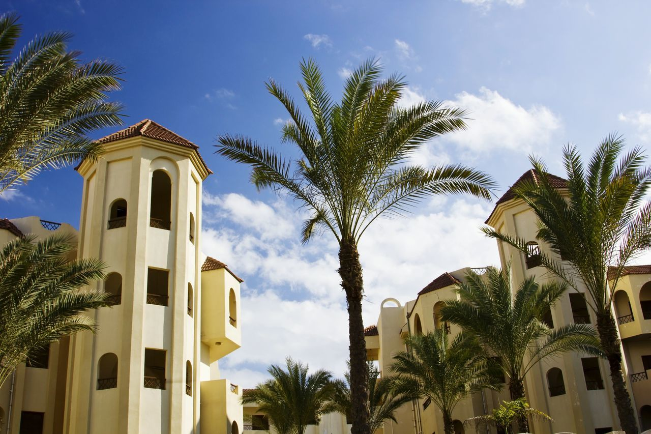 palm tree, tree, architecture, built structure, building exterior, low angle view, religion, growth, sky, no people, place of worship, spirituality, day, palm frond, outdoors, plant