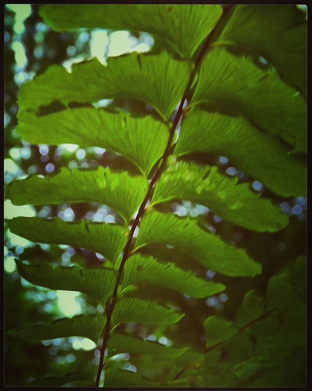leaf, growth, nature, green color, beauty in nature, plant, close-up, day, no people, freshness, outdoors, water, fragility