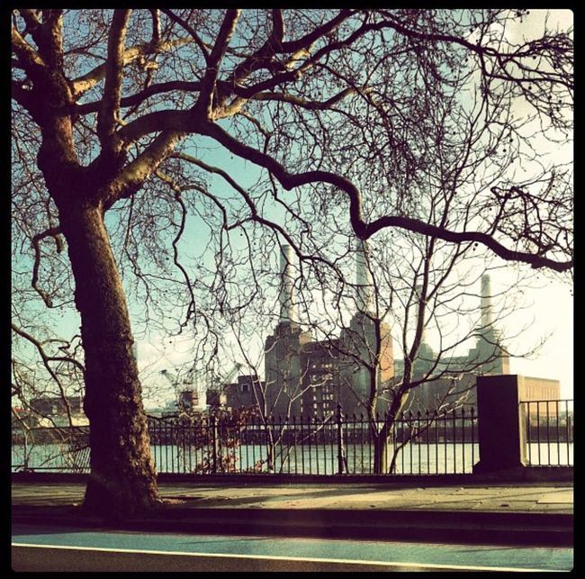 Architecture Tree Bare Tree Famous Place Outdoors City Life Battersea Power Station London