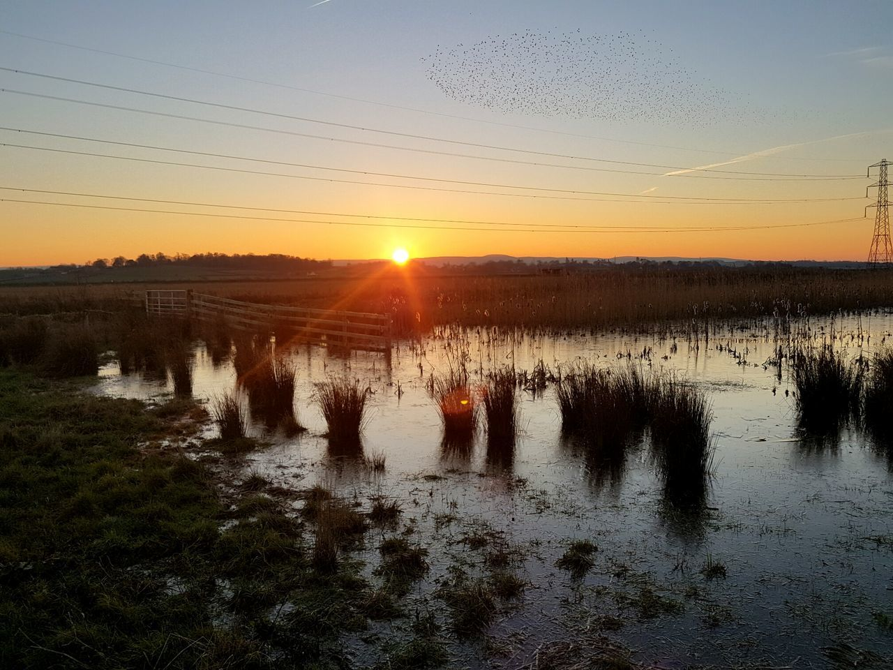 Sunset Large Group Of Animals Reflection Sky Sun Nature Large Group Of People Water Outdoors Landscape Bird Beauty In Nature Agriculture Flock Of Birds Togetherness Animal Themes Day People Running Late Marshland  Tire Track Beauty In Nature No People Agriculture EyeEmNewHere