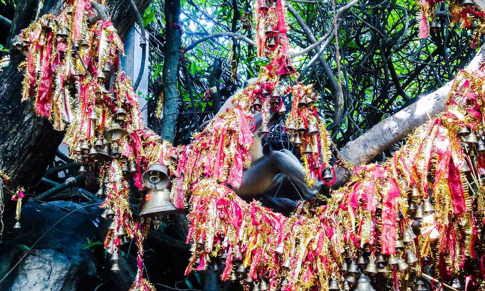 Bells Devotion Trust Believe EyeEm Gallery From My Point Of View Faith&devotion Faithhopelove Colour Of Life Hidden Gems  Bell Monkey Sitting in Ghanteswari Odisha India