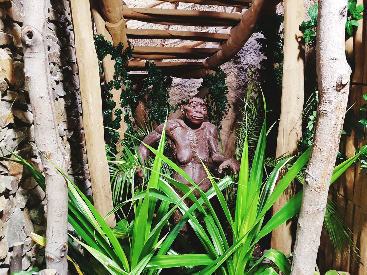 Mature Adult Plant Outdoors Grass Day Tree Eyeglasses  Adults Only One Person People Adult Human Body Part Lucy Neandertal Zoo Statue