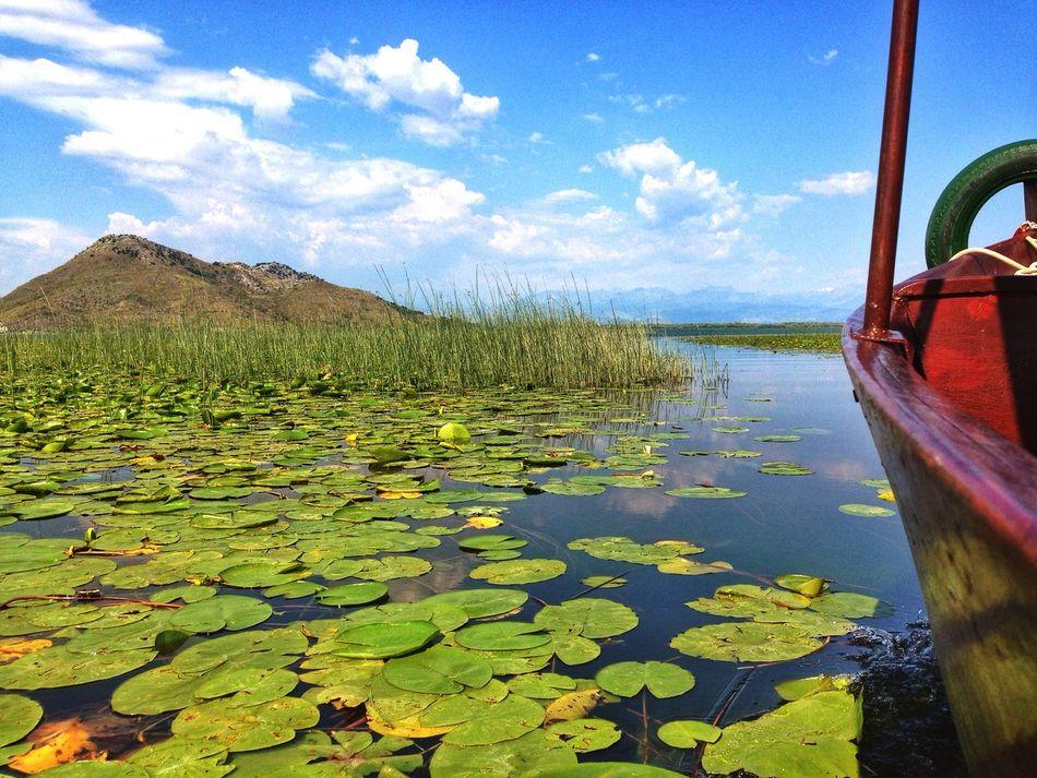 Nature Lake Skadar Montenegro Crna Gora Boats Sailing