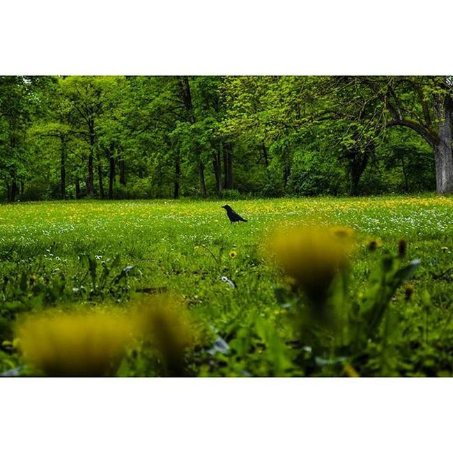 Munique. Parededevidro Fotoxigenio Nikon Green Englishgarden Munichworld Retragos Desafiodasfotos @1x5 1x5