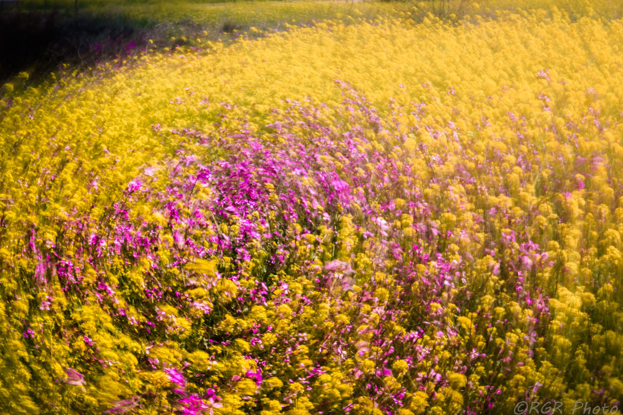 flower, purple, yellow, field, nature, beauty in nature, plant, outdoors, rural scene, agriculture, landscape, flowerbed, growth, scenics, no people, beauty, day, multi colored, grass, freshness, perfume, flower head