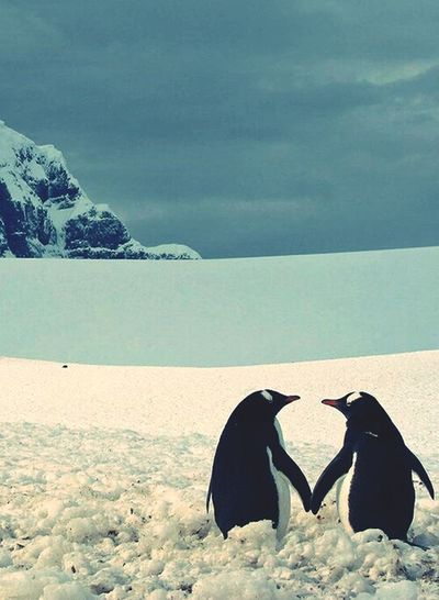 Pengu Love Forever Special Animal Happy
