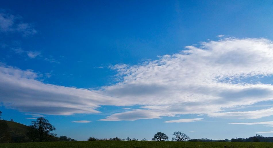 Cloud - Sky Blue Sky Low Angle View Tree Nature No People Outdoors Day Welshpool Wales Winter Spring Clouds Grass Trees Countryside