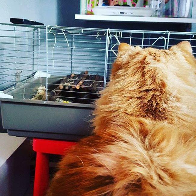 J'observe j'observe.... Cela me semble intéressant ! Cat Minus Lolcat Chat