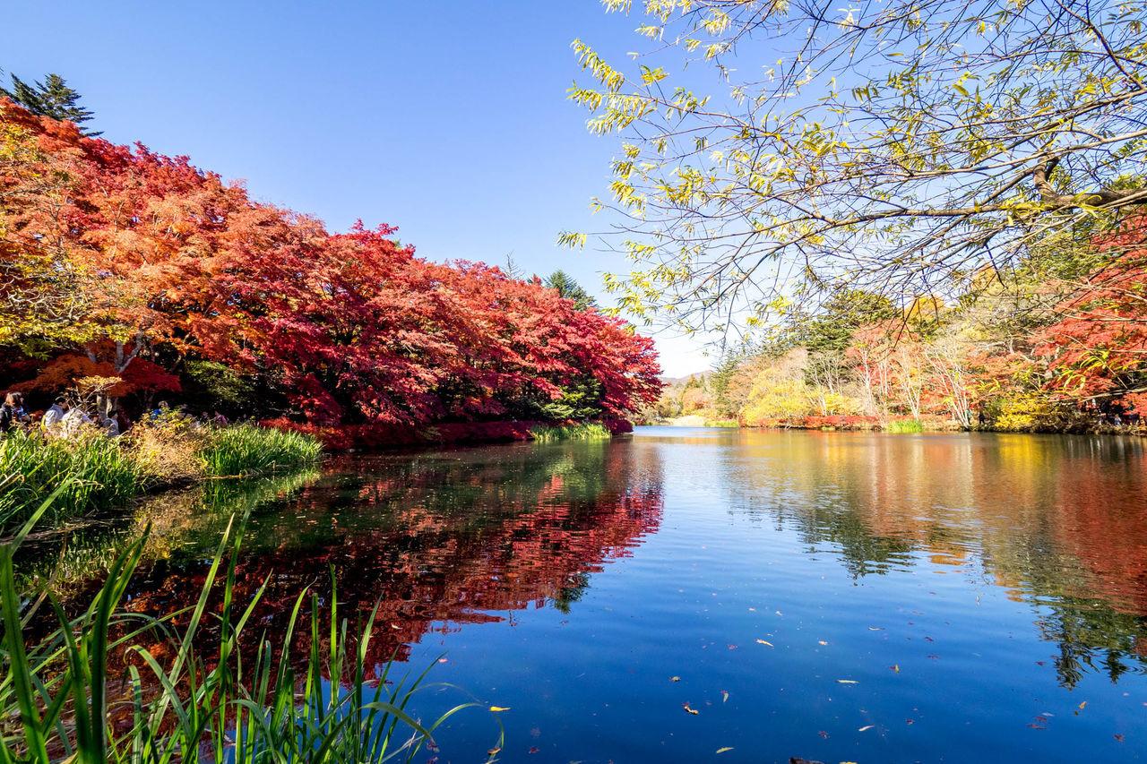 Autum Autumn Autumn Colors Autumn Leaves Autumn Trees Autumn🍁🍁🍁 Blue Sky Japan Japan Photography Kaede Karuizawa 軽井沢 Karuizawa,Japan Koyo Leaf Leaves Maple Leafs Maple Trees Momiji Outdoor Photography Red Color Red Leaf Red Leaves