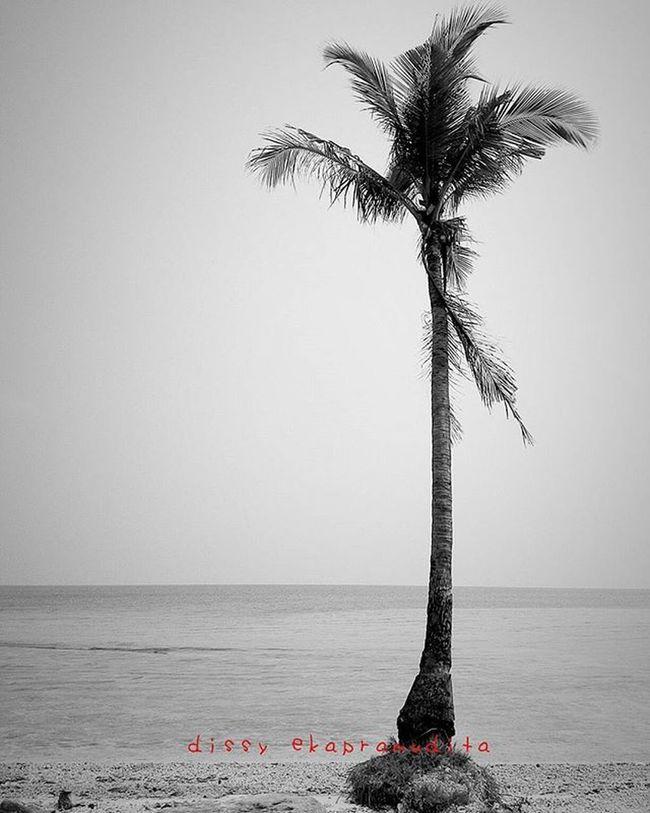 I stand alone Coconuttrees Tundaisland INDONESIA 1000kata Asiangeographic Nationalgeographic Natgeotraveler Travelgram Travelingindonesia BeautifulIndonesia Instalike Instagram Instagood Instadaily Instamood