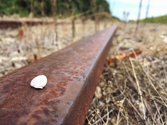 Train Tracks Cape Charles Quiet Places Snail Shell Abandoned Train Tracks Hidden Gems