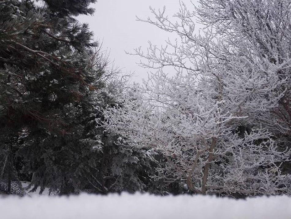 Eynali Winter Snow