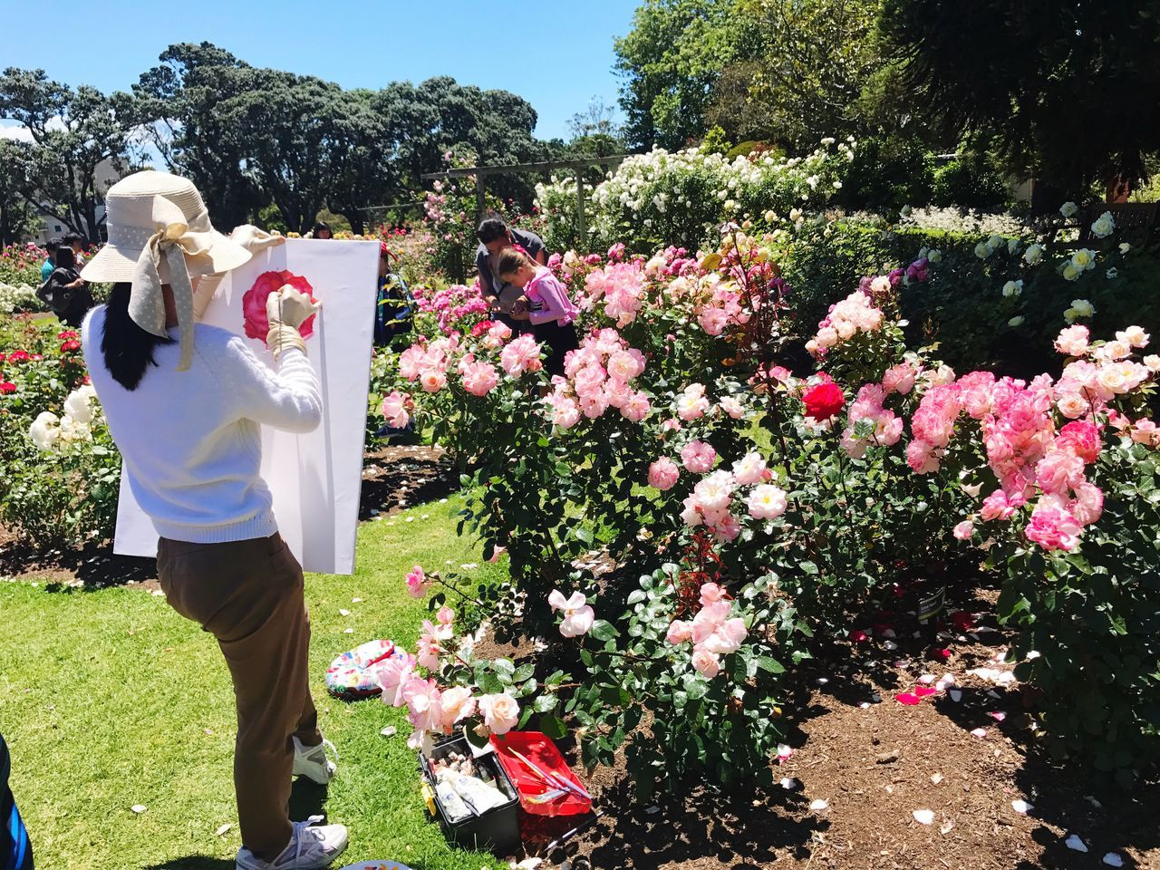 Pink Color Painting Roses Rose Gardens One Person Drawing - Activity