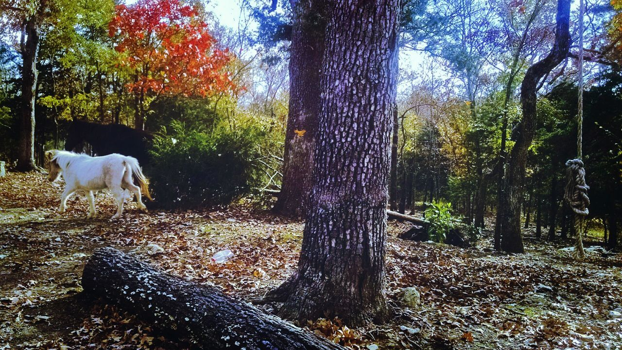 tree, tree trunk, domestic animals, dog, one animal, animal themes, nature, mammal, no people, day, outdoors, autumn, growth, pets, forest, branch, beauty in nature