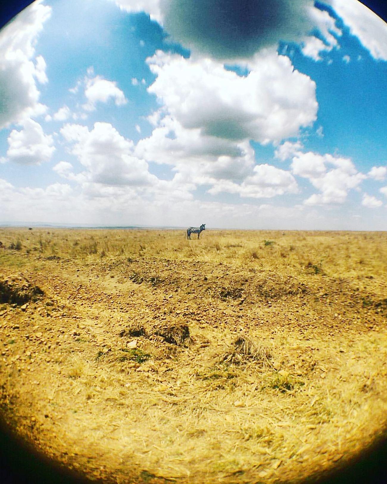 Kenya Safari Animals Outdoors Cloud - Sky Day Desert Nature Zebra Wildlife