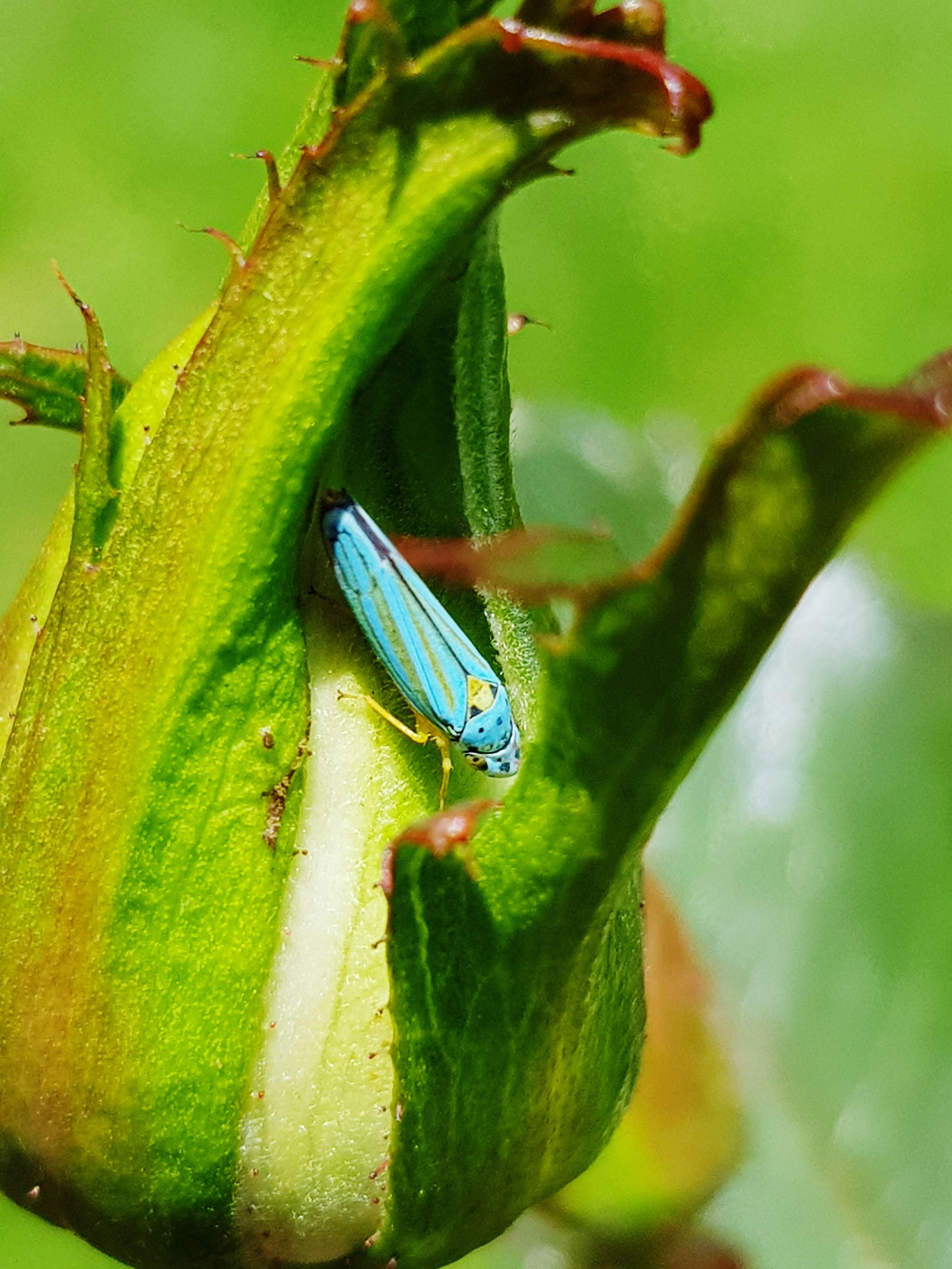 one animal, animal themes, animals in the wild, insect, green color, animal wildlife, day, nature, close-up, plant, leaf, focus on foreground, no people, outdoors, growth, beauty in nature