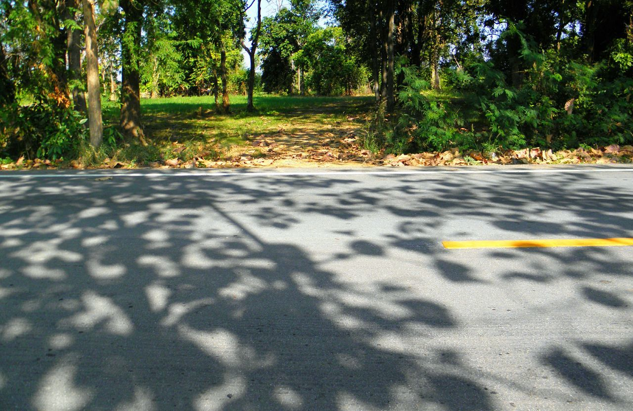 shadow, road, sunlight, tree, nature, day, outdoors, yellow, leaf, no people