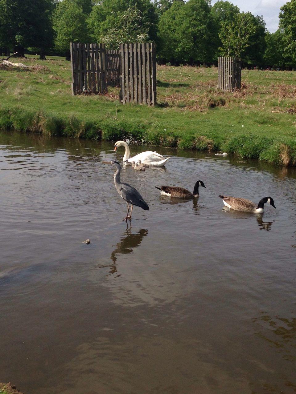 Flock Of Birds Swimming In Lake
