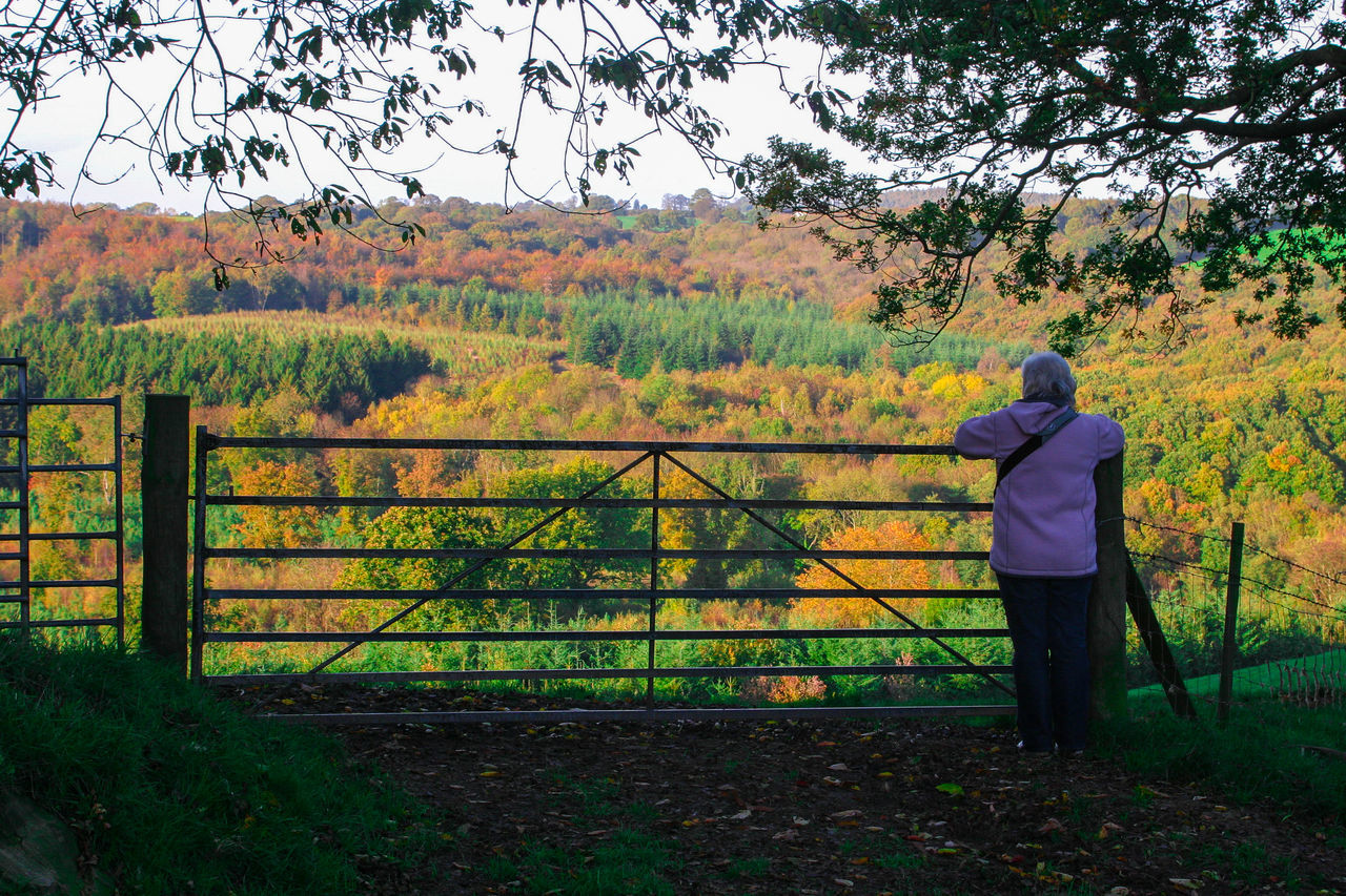 Autumn Colors Beauty In Nature Casual Clothing Day Field Full Length Gate Grass Growth Landscape Leisure Activity Lifestyles Nature One Person Outdoors People Real People Rear View Sky Standing Tree Wood Worcestershire