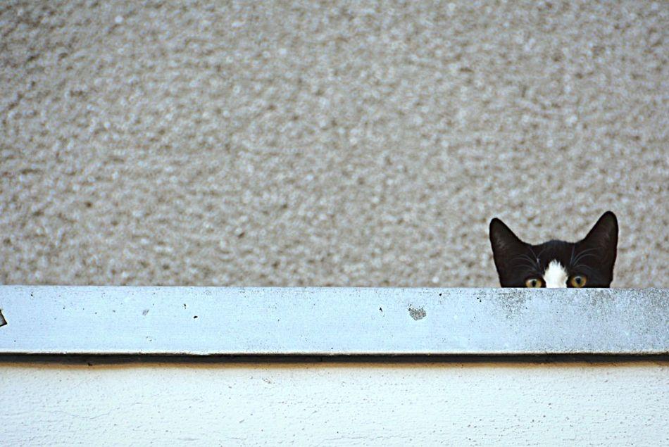 Beautiful stock photos of cat, Animal Themes, Cat, Day, Domestic Animals