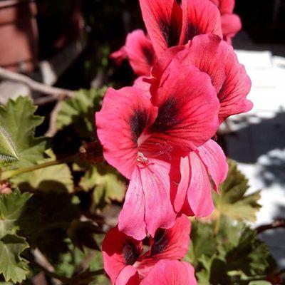 Probando la cámara n.n Nofilter ,Flowers ,JugueteNuevo ,Leagoo