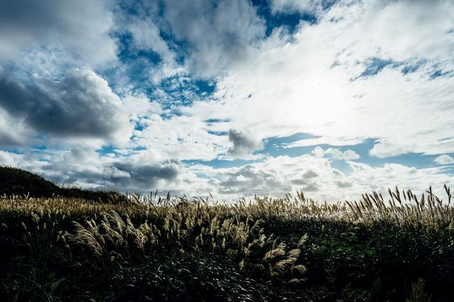 Silver Grass Clouds And Sky Horizon Over Water Calm Sea Travel Atomosphere Hokkaido Hokkaido,Japan Beauty In Nature September September 2016 Japan Photography Non-urban Scene Sea And Sky, Clouds