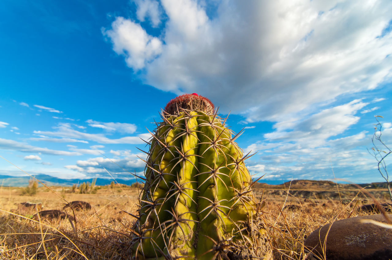 Closeup cactus with a deep blue sy Arid Climate Beauty In Nature Cactus Clouds Colombia Desert Drought Heat Hot Huila  Landscape Nature Neiva Pillar Rock Sand Scenery Scenics Stone Tatacoa Tourism Tranquil Scene Valley View Wilderness