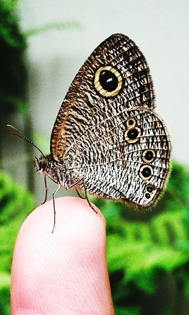 Ypthima sp. Butterfly Butterfly Garden Butterfly Collection Nature Photography Naturelovers Butterfly Watching Butterfly Watchers