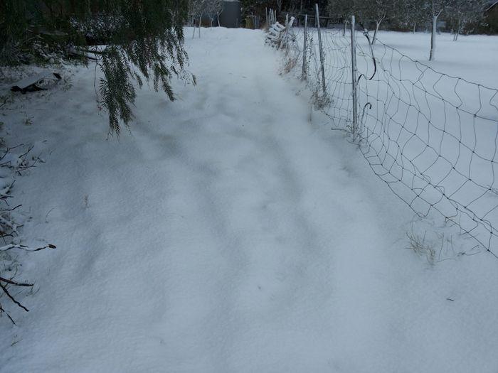 Let It Snow Snow Snow Day Snowscape Wintertime Winter Winter Landscape Winter Morning Cold Day Countryside