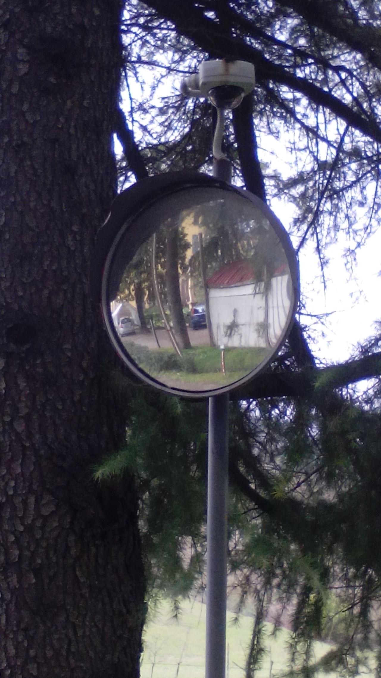 Day Outdoors Rami Riflessi Specchio Tree Tree Trunk Tronco