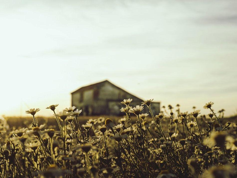 Rural Decay RuralTreasures  Rural Moods Rural Landscape