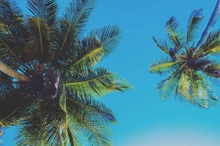 Look up! 🏝️ Wanderlust Explore Travel Discover  Nature Visualauthority Simplyadventure TheCreatorClass Createcommune Agameoftones Bleachmyfilm Exploretocreate Exklusive_shot Heatercentral AOV Expofilm Thewhisperers Mobilemag Wonderful_places Beach Panamá Palmtrees Paradise Clearsky Visualambassadors passionpassport voyage lostraveling nofilter ppbrightcolors