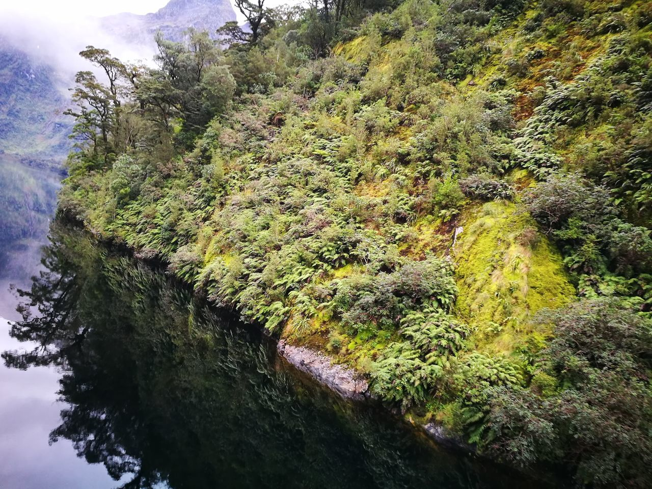 Nature Beauty In Nature Doubtful Sound Reflection New Zealand
