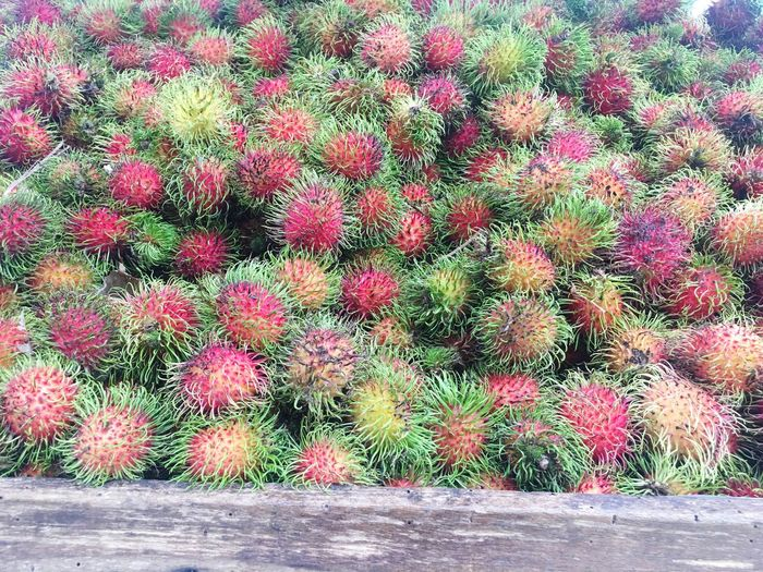 Growth Plant Outdoors Day Cactus Nature No People Green Color Red Flower Beauty In Nature Freshness