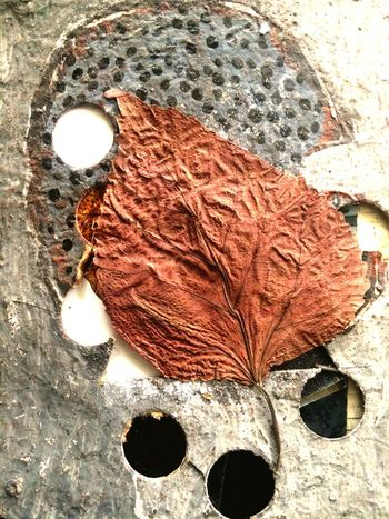 Texture Texturas Y Colores Textured  Testura Leave No People Close-up Nature Dry Leaves Detail